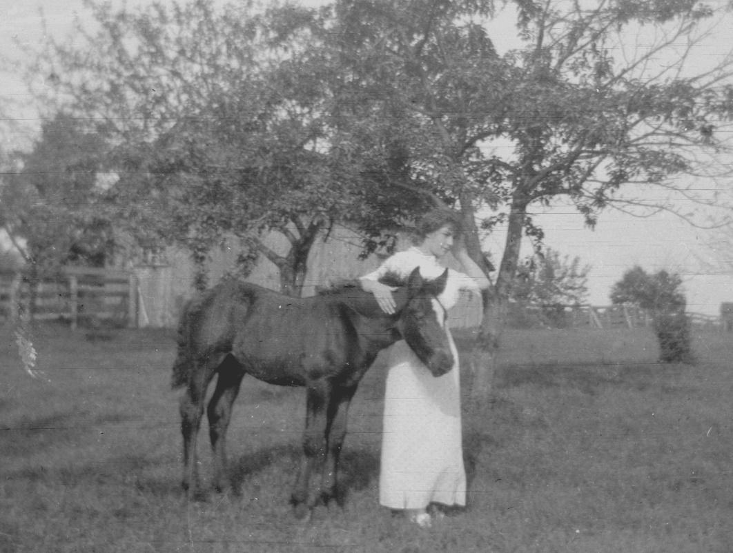 draft foal