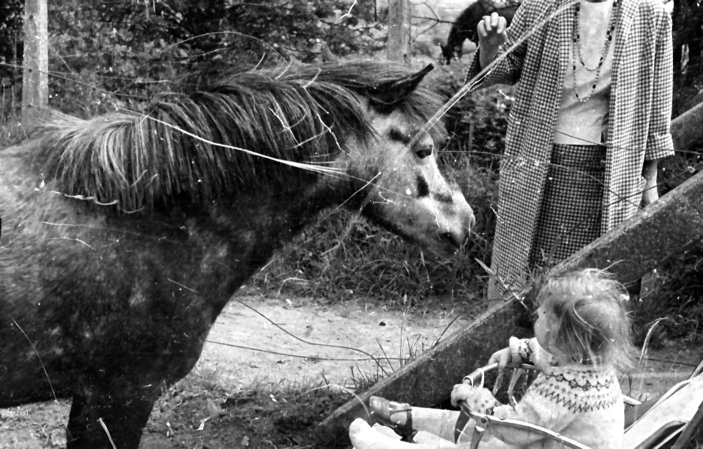 jenny and horse