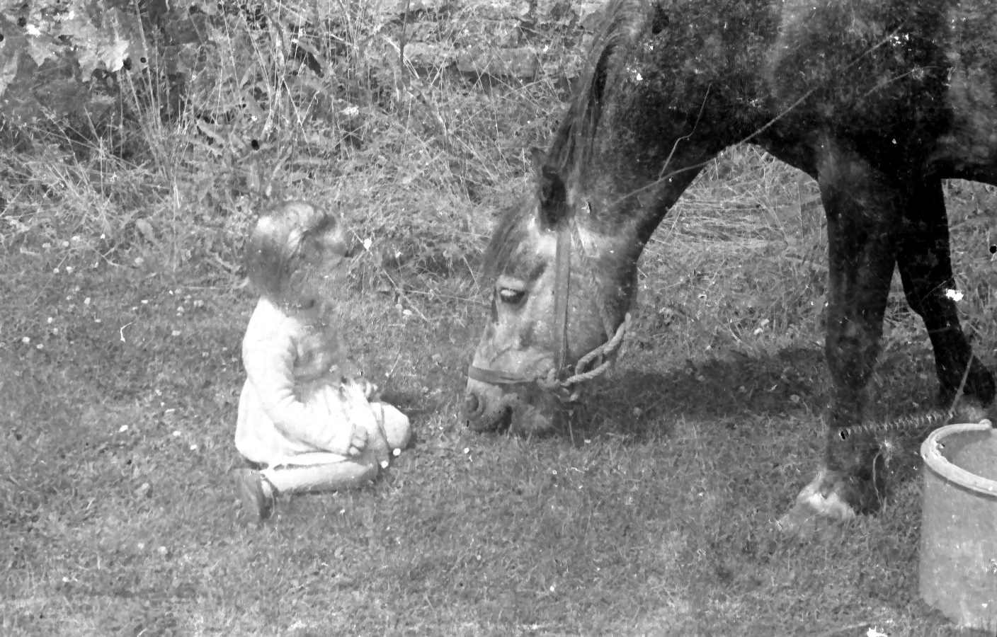 jenny with equine friend